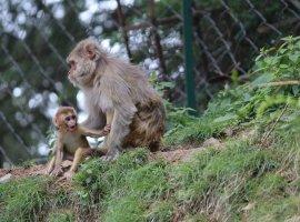 [Teste de vacina contra HIV funciona em macacos, diz novo estudo]