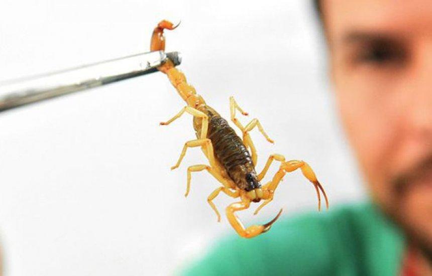 [Saúde alerta para picadas de escorpião, mais comuns no verão]