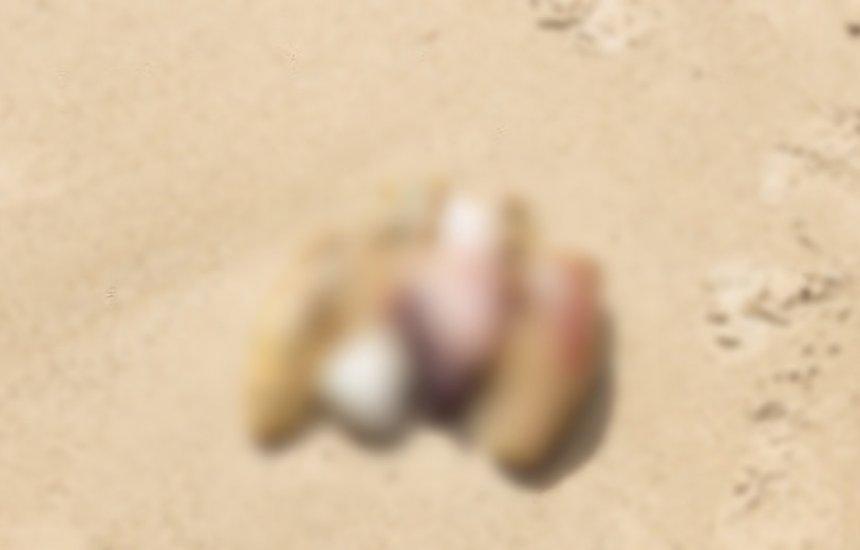 [Órgãos são encontrados por banhistas em praia de Vilas do Atlântico]