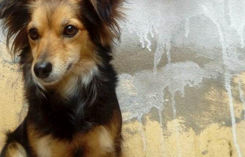 [Donos procuram por cadela Nikita que desapareceu em Camaçari]