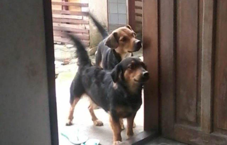 [Dona procura por cadelas que fugiram na Gleba A]