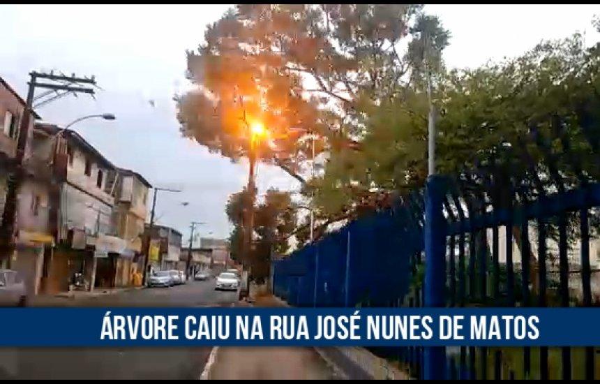 [Vídeo mostra queda de árvore após chuva forte em Camaçari]