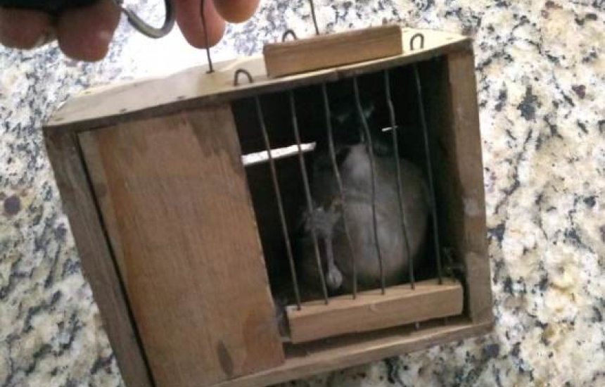 [Seis aves silvestres são resgatadas em Camaçari]