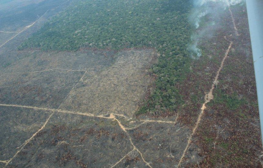[Alertas de desmatamento na Amazônia sobem 203% entre junho e agosto]
