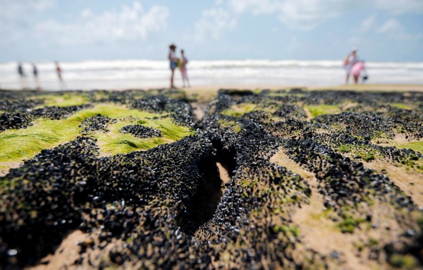 União reconhece situação de emergência em seis cidades da BA atingidas por óleo