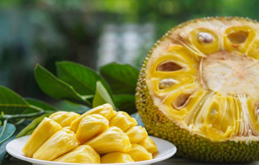 [Descubra os benefícios da jaca e seu poder nutricional da folha até o caroço]