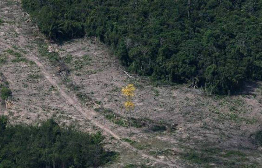[Desmate em áreas protegidas sobe e supera média de toda a Amazônia]