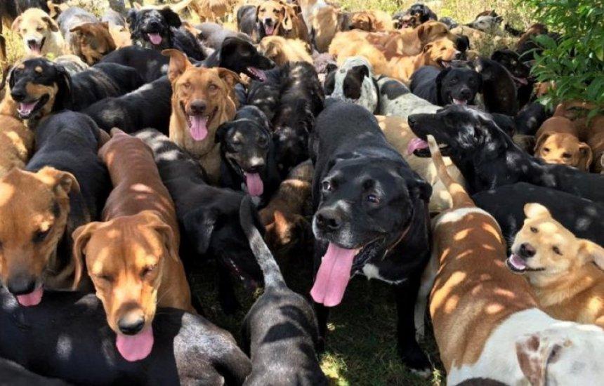 [Morador de Vila de Abrantes denuncia dona de bar que cria mais de 30 cachorros]