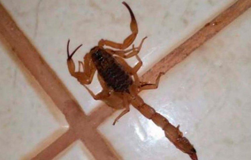 [Idosa morre após ser picada por escorpião em Amargosa]