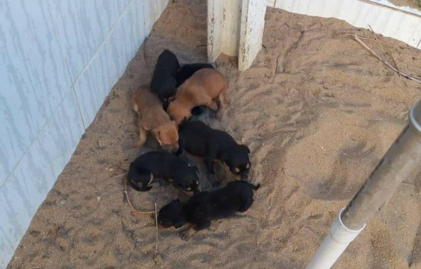 [PMs resgatam animais abandonados em Cruz das Almas]