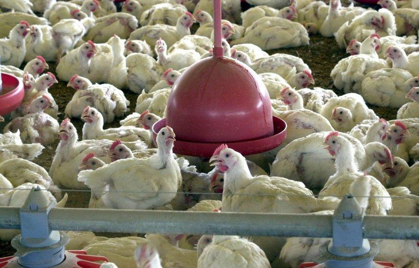 [China reporta surto de gripe aviária]