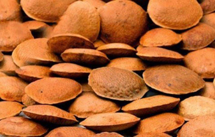Sementinha poderosa: quatro benefícios da semente de sucupira para saúde