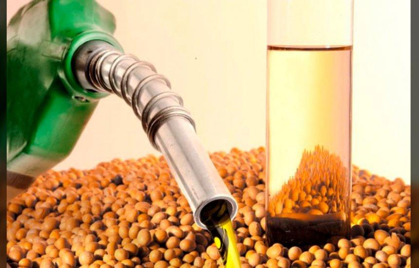 [Biodiesel: produtores pedem à ANP ação contra responsável pela redução de mistura]
