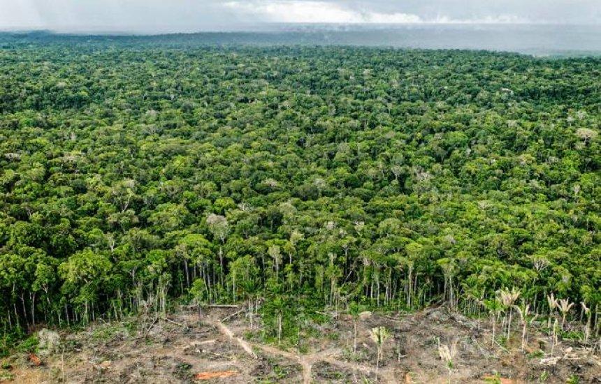 [Desmatamento na Amazônia chega a quase 10.000 km² em 12 meses]