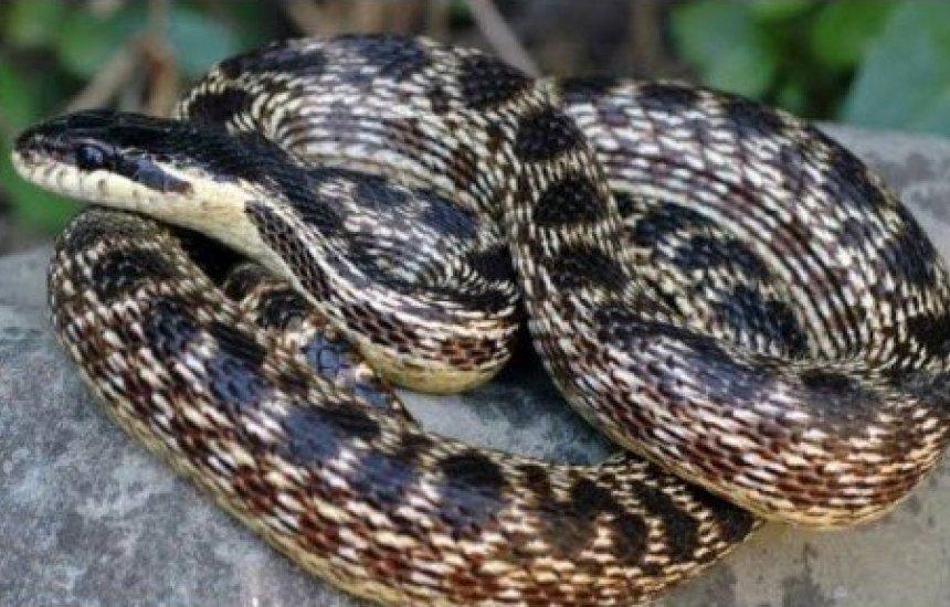 [UFBA já devolveu à natureza 50 serpentes desde do isolamento]
