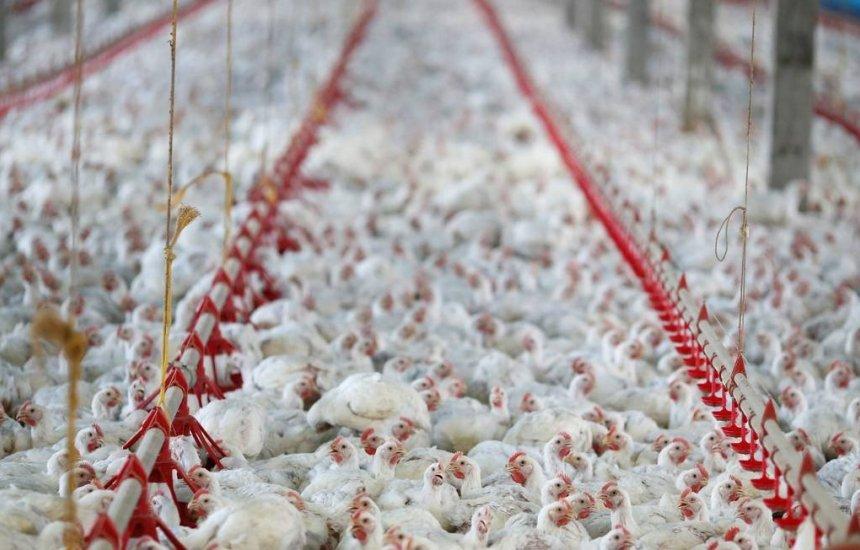 [China afirma que asas de frango congeladas do Brasil apresentam teste positivo para coronavírus]