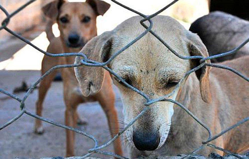 [Senado vota projeto que aumenta pena por maus-tratos a cães e gatos]