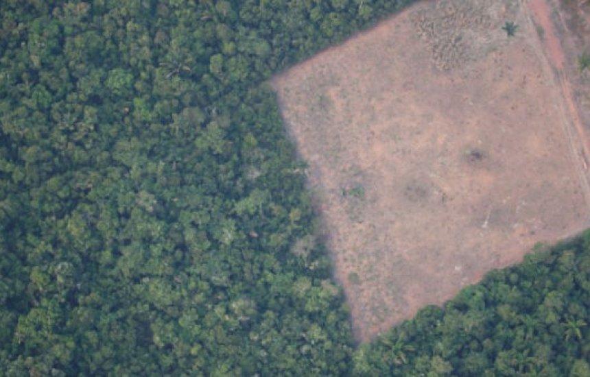 [Projeto proíbe desmatamento na Amazônia por 5 anos e incentiva recuperação de áreas]