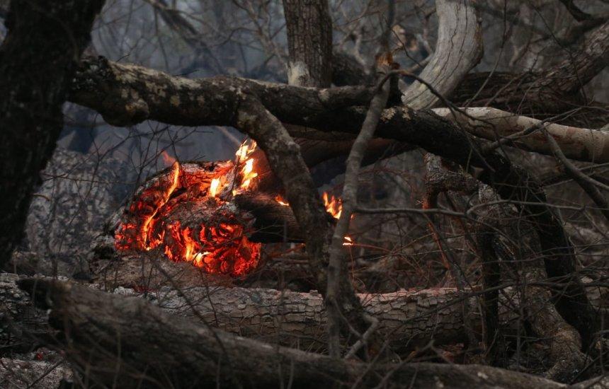 [Fumaça das queimadas na Amazônia e no Pantanal atinge países vizinhos]