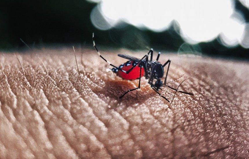 [Casos de Chikungunya crescem mais de 300% na Bahia; Salvador tem aumento acima de 250%]