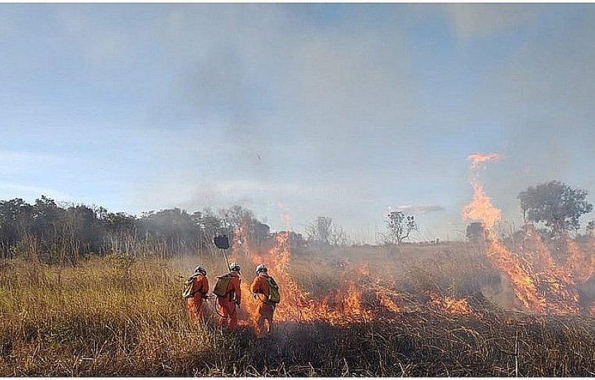 Oeste da Bahia: Incêndio florestal em Barra se aproxima de casas de moradores