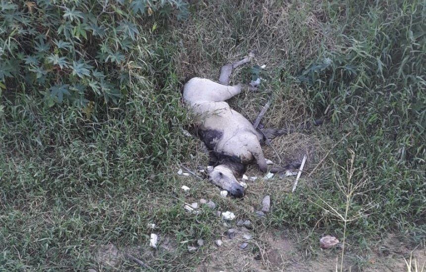 [Morador pede retirada de cavalo morto no bairro Nova Vitória: 'Odor insuportável']