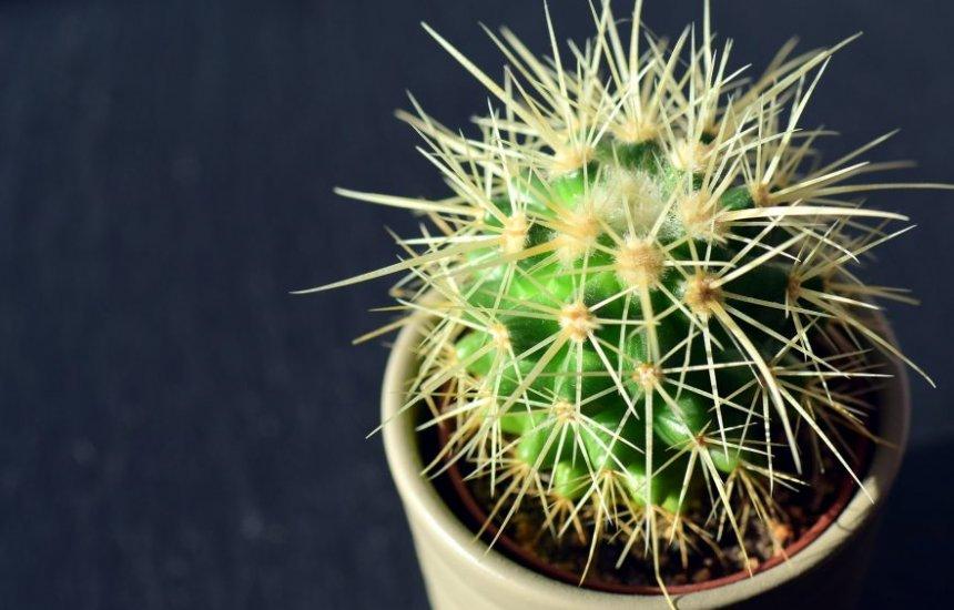 [Cacto contra mau olhado: ter esta planta em casa evita que a energia ruim penetre]