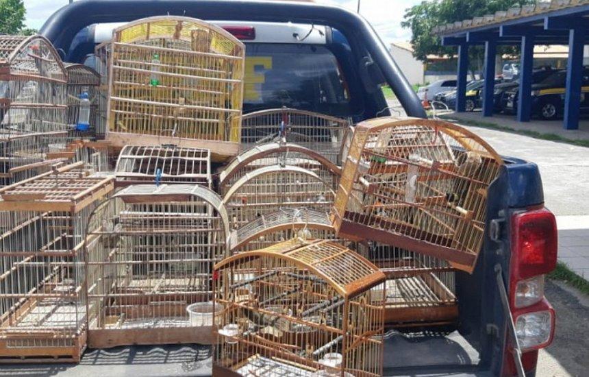 PRF apreende 36 animais silvestres mantidos em cativeiro na BR-324