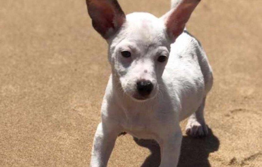 [Dona de cadela desaparecida oferece R$ 200,00 para quem encontrar o animal]