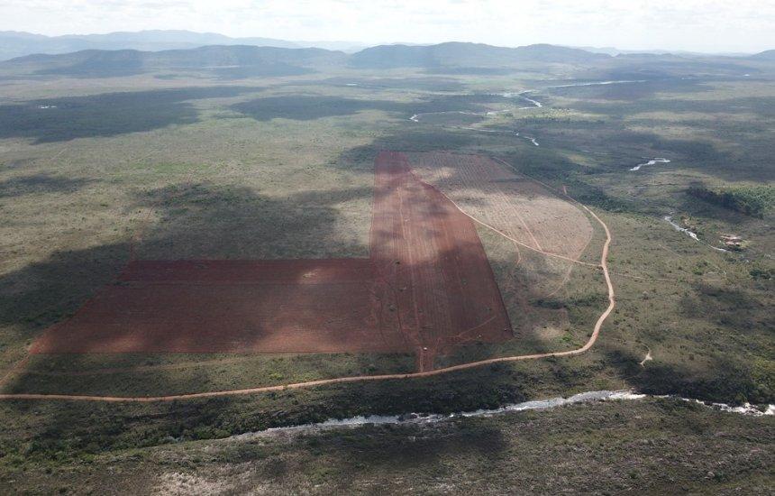 [Área na Chapada Diamantina é desmatada com licença irregular e preocupa agricultores familiares]