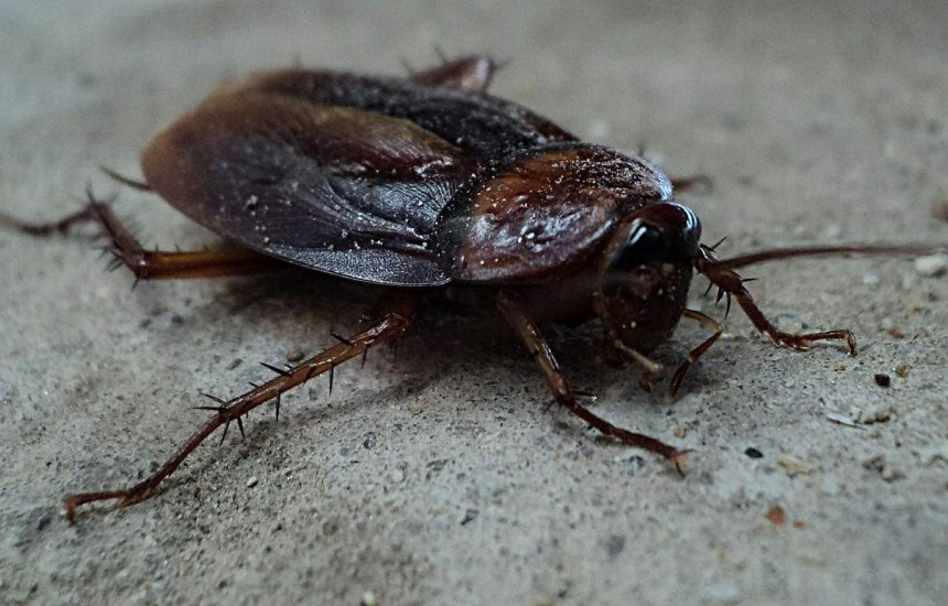 [Verão gera alerta para combate à dengue e pragas, como ratos, baratas e cupins]
