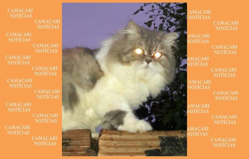 [Procura-se gato desaparecido há dois meses no Parque Real Serra Verde]