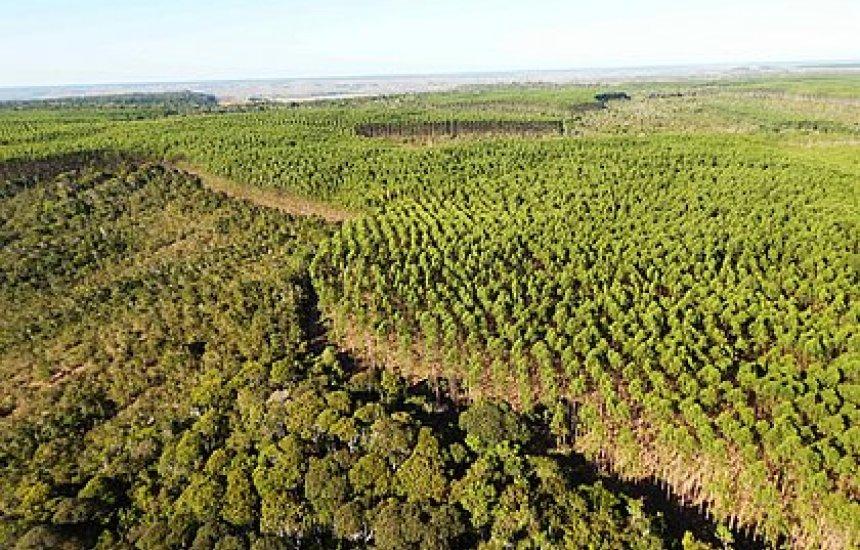 [Bracell investe em manejo florestal sustentável para conservar o solo]