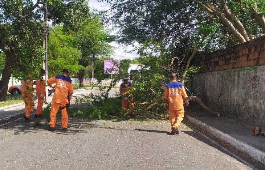 [Defesa Civil remove duas árvores caídas em Camaçari; previsão é de chuva para próximos dias]